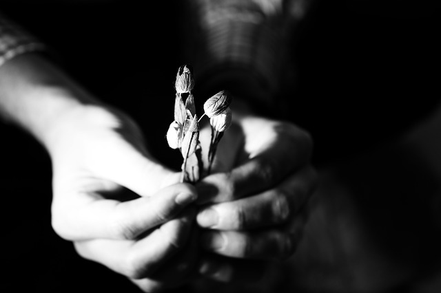 flowers-2309712_640
